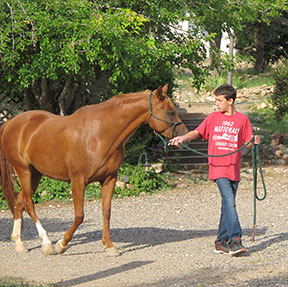 how to start a horse therapy program