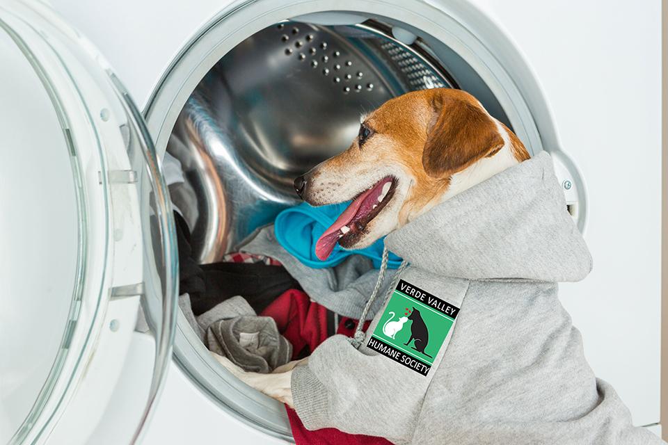20170529_dog-and-washing-machine