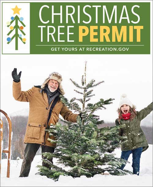 Coconino NF to sell limited number of Christmas tree ...